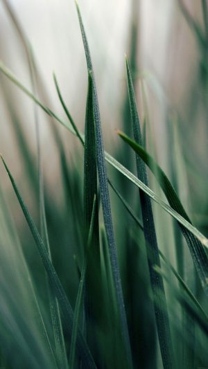 Grass World Garden Leaf Nature iPhone 7 wallpaper