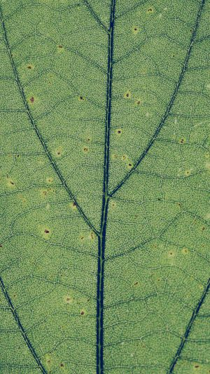 Green Leaf Texture Nature Pattern iPhone 7 wallpaper