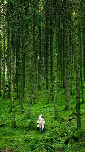 In Wood Forest Green Mountain Nature iPhone 7 wallpaper