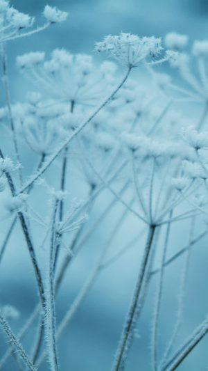 Ipad Snow Winter Flower Blue Nature Bokeh iPhone 7 wallpaper