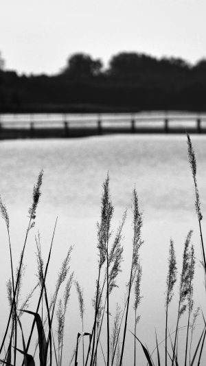 Lake View Flower Water Calm Nature Bokeh Dark Bw iPhone 7 wallpaper