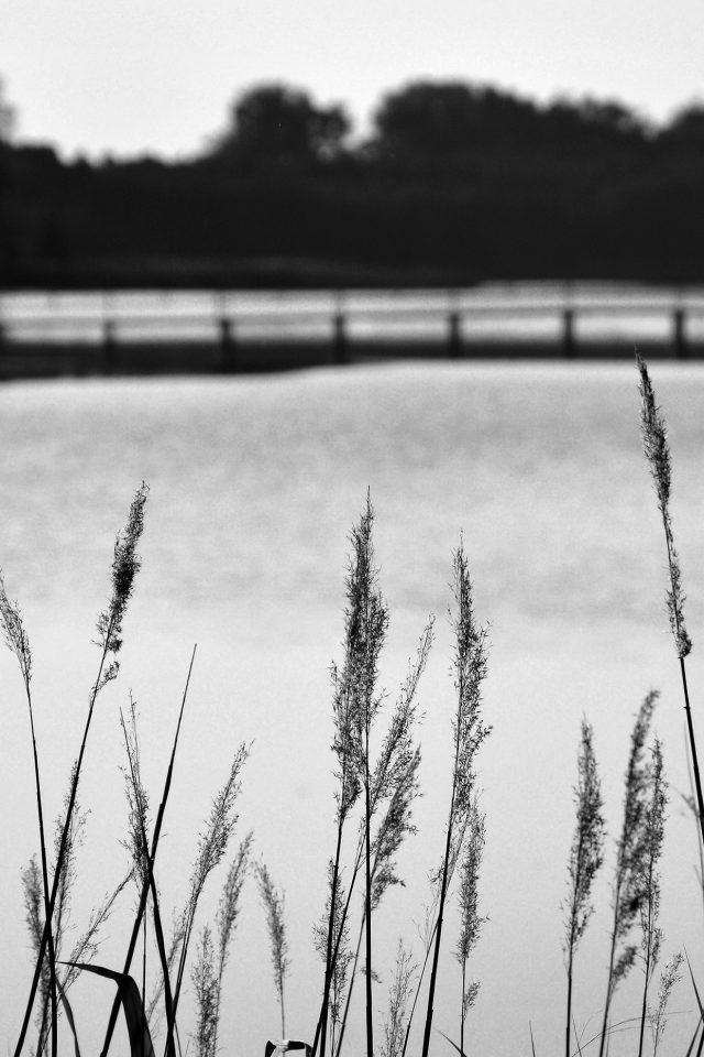 Lake View Flower Water Calm Nature Bokeh Dark Bw Iphone 7