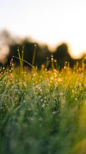Lawn Green Nature Sunset Light Bokeh Sprin iPhone 7 wallpaper