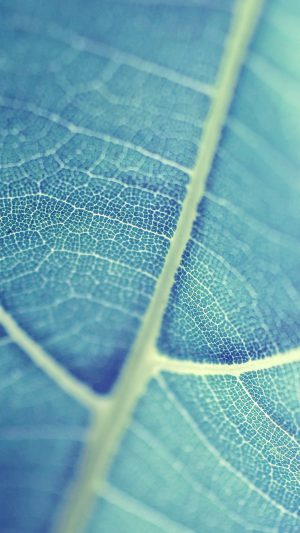 Leaf Bokeh Blue Nature iPhone 7 wallpaper