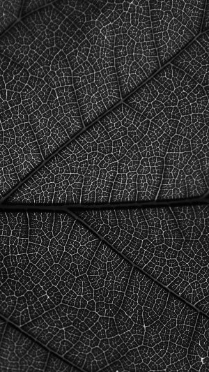 Leaf Dark Bw Nature Texture Pattern iPhone 7 wallpaper