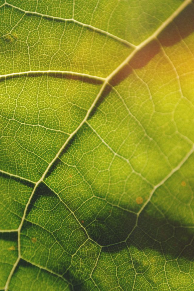 Leaf Flare Nature Wood Love Pattern iPhone wallpaper