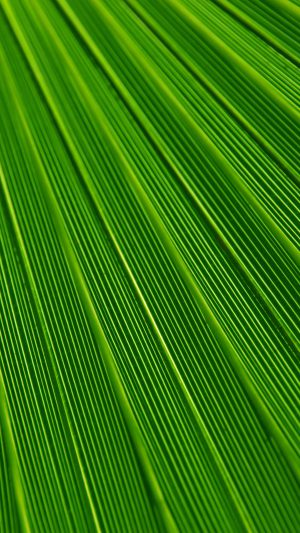 Leaf Green Surface Texture Nature Pattern iPhone 7 wallpaper
