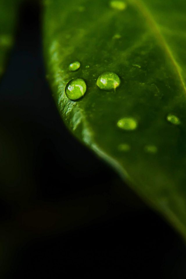 Leaf Rain Drop Green Nature Iphone 7 Wallpaper