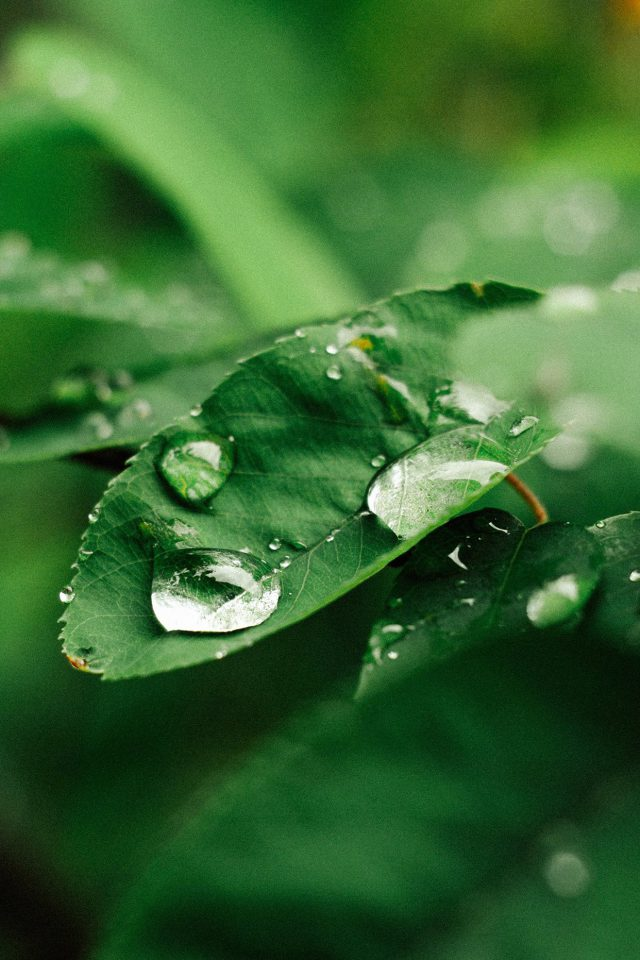 Leaf Rain Green Nature Forest Iphone 7 Wallpaper