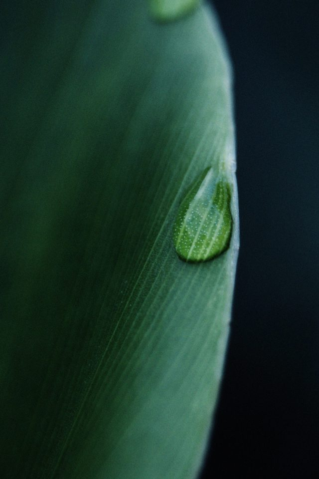 Leaf Raindrop Green Nature Iphone 7 Wallpaper