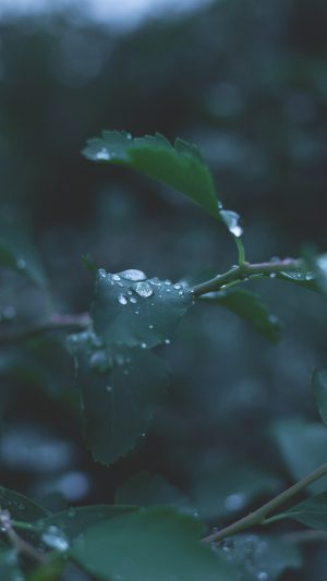 Leaf Water Rain Nature Green iPhone 7 wallpaper