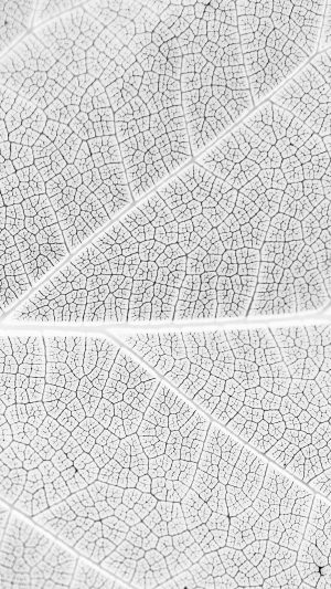 Leaf White Bw Nature Texture Pattern iPhone 7 wallpaper