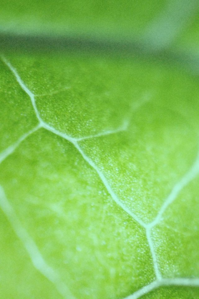 Leaf Zoom Green Nature Bokeh iPhone wallpaper