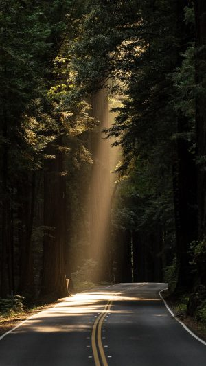 Sunrays Road Wood Forest Way Nature iPhone 7 wallpaper