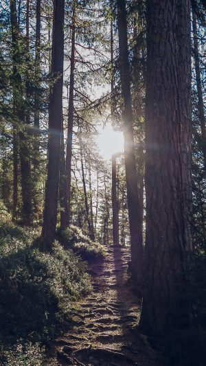 Light Wood Sun Forest Mountain Nature iPhone 7 wallpaper
