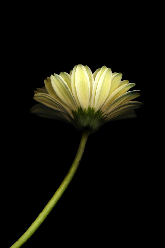 Lonely Flower Dark Simple Minimal Nature iPhone wallpaper