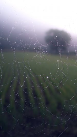 Morning Dew Spider Web Rain Water Nature iPhone 7 wallpaper