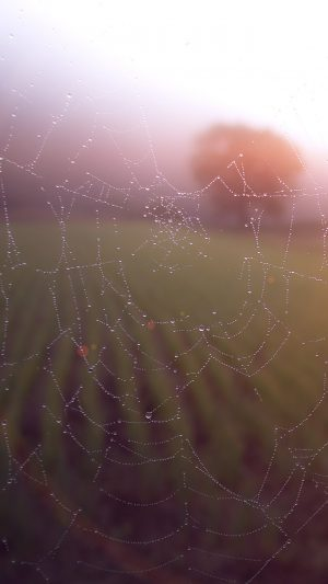 Morning Dew Spider Web Rain Water Nature Flare iPhone 7 wallpaper