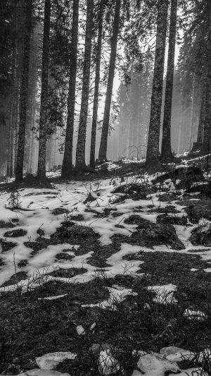 Mountain Snow Woods Nature Dark Bw iPhone 7 wallpaper
