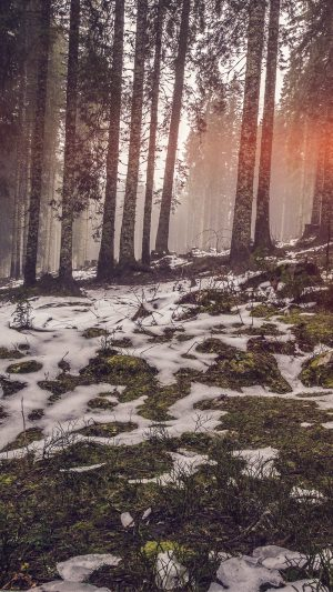 Mountain Snow Woods Nature Flare iPhone 7 wallpaper
