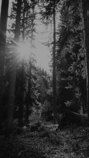 Mountain Sunlight Bw Marco Jorger Nature iPhone 7 wallpaper