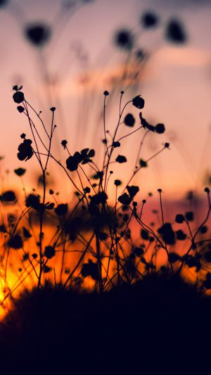 Night Nature Flower Sunset Dark Shadow Red iPhone 7 wallpaper