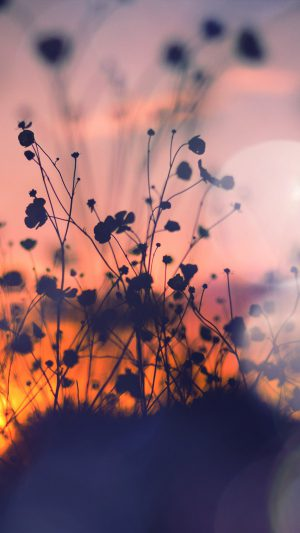 Night Nature Flower Sunset Dark Shadow Red Flare iPhone 7 wallpaper