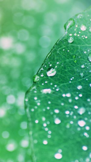 Oasis Leaf Rained After Morning Nature iPhone 7 wallpaper