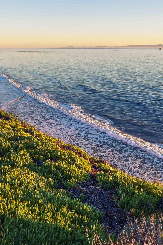 Peace Nature Wood Sea Ocean Nature iPhone wallpaper