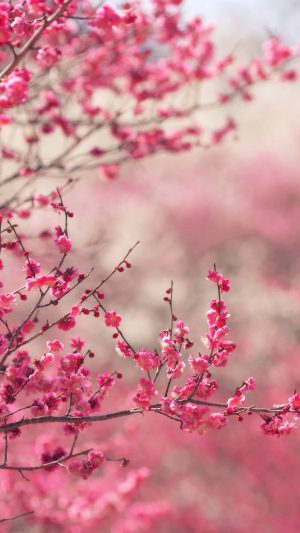 Pink Blossom Nature Flower Sprin iPhone 7 wallpaper
