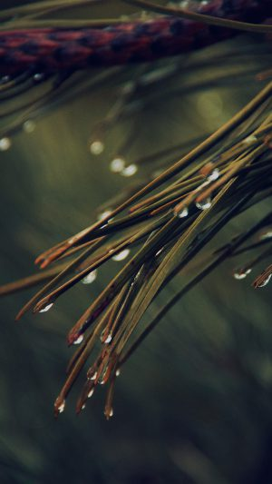 Rain Pine Tree Dark Green Nature Mountain iPhone 7 wallpaper