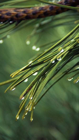 Rain Pine Tree Green Nature Mountain iPhone 7 wallpaper