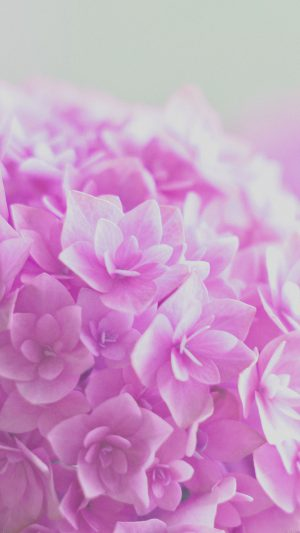 Red Hortensia Flower Beautiful Nature iPhone 7 wallpaper