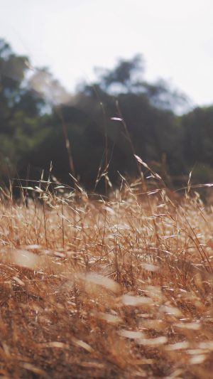 Rye Grass Field Mountain Cole Patrick Nature iPhone 7 wallpaper