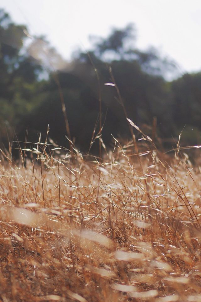 Rye Grass Field Mountain Cole Patrick Nature iPhone wallpaper