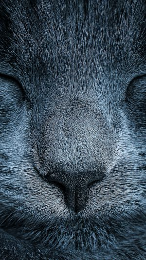 Sleeping Blue Cat Zoom Nature iPhone 7 wallpaper