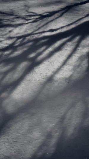Snow Shadow Winter Tree Nature iPhone 7 wallpaper