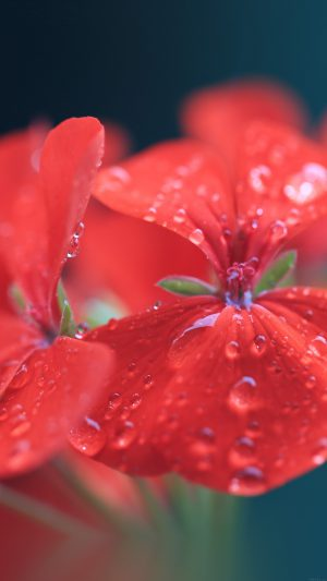Spring Flower Party Red Nature iPhone 7 wallpaper