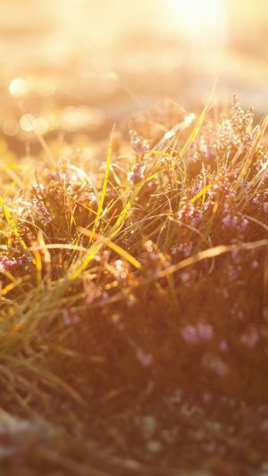 Sun Rise Flower Grass Love Nature iPhone 7 wallpaper