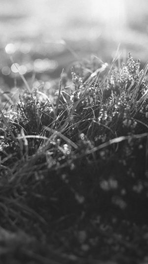 Sun Rise Green Leaf Bw Flower Grass Love Nature iPhone 7 wallpaper