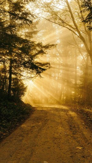 Sunny Road Wood Forest Light Tree Nature Gold iPhone 7 wallpaper