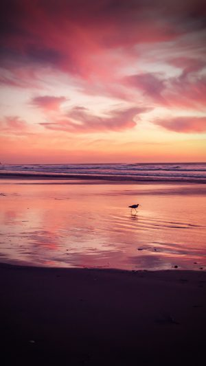 Sunset Beach Bird Red Orange Nature Sea Vignette iPhone 7 wallpaper