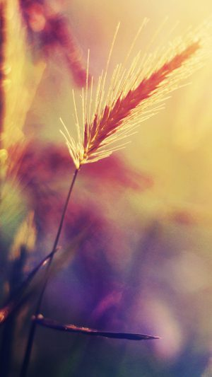 Sunset Reed Flower Flare Nature iPhone 7 wallpaper