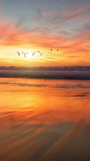 Sunset Sea Nature Orange Summer Sky Bird iPhone 7 wallpaper
