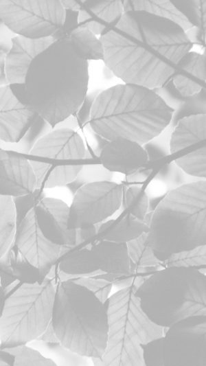 Tree Blossom Nature Leaf Green White Bw iPhone 7 wallpaper