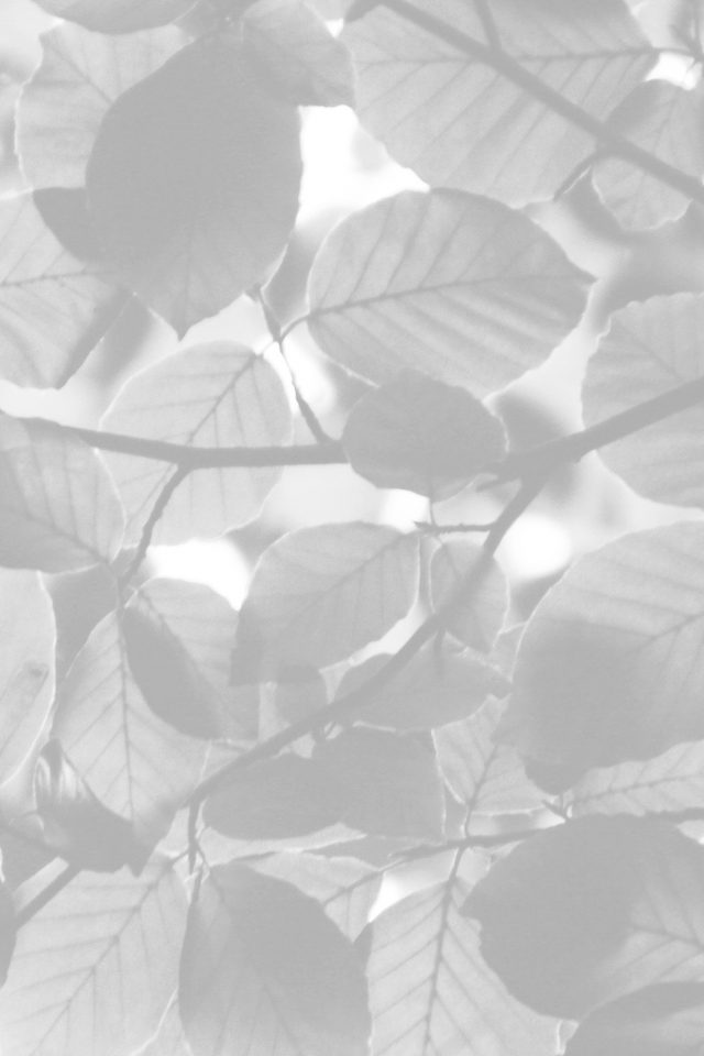 Tree Blossom Nature Leaf Green White Bw iPhone wallpaper