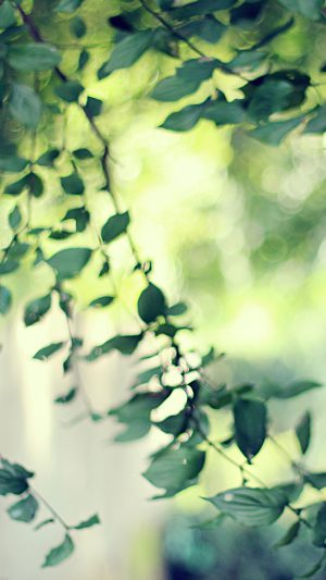 Tree Bokeh Calm Morning Nature Park iPhone 7 wallpaper