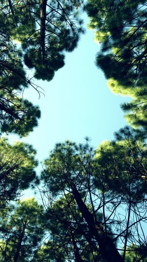 Tree Mountain Sky Wood Nature Green iPhone 7 wallpaper