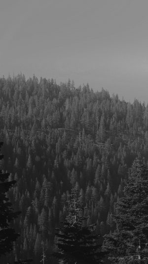 Tree Wood Mountain Nature Dark Bw iPhone 7 wallpaper