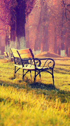Wallpaper Fall Park Chair Lonely Nature iPhone 7 wallpaper